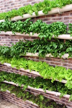 Vesikourut ja hyötyviljely Gutters and utility farming Gutter Garden, Veg Garden, Vegetable Garden Design, Garden Trellis, Garden Beds, Home And Garden, Back Gardens, Outdoor Gardens, Vertical Garden Diy