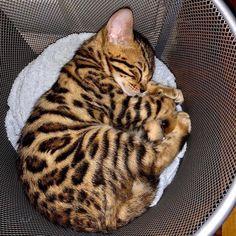 Super Cute Animals, Cute Little Animals, Cute Funny Animals, Cutest Animals, Cute Baby Cats, Kittens Cutest, Cats And Kittens, Pretty Cats, Beautiful Cats