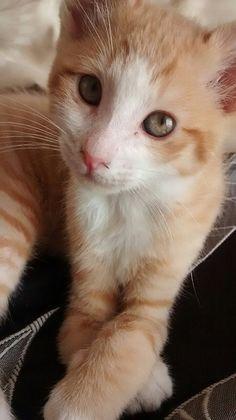 Paul Gray Os gatos foram colocados no mundo para refutar o dogma de que todas as coisas foram criadas para servir ao homem.