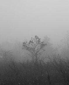 Nagyszénás ködben.  #hungary #mountain #fog #mist #nature #trees #hiking #naturephoto #dslr #canon #canonhun #latergram Hungary, Mists, Canon, Hiking, Mountain, Trees, Peace, Abstract, Artwork