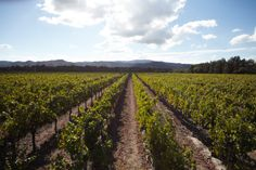 #Napa Valley is filled with laid-back retreats, twisting acres of vineyards, and rolling blond hills.