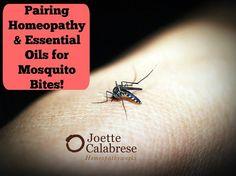 mosquito blog image