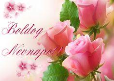 Name Day, Rose, Birthday, Flowers, Plants, Pink, Birthdays, Saint Name Day, Plant