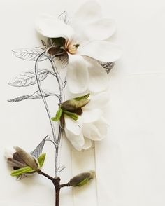 Magnolia and Flower illustration No. 6692 Kari Herer