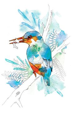 Watercolour and Nature Kingfisher - Illustration By Willa Gebbie, via Flickr.