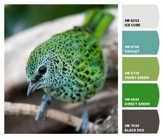Paint colors from Chip It! by Sherwin-Williams Pretty Birds, Love Birds, Beautiful Birds, Animals Beautiful, Animals Amazing, Beautiful Things, Exotic Birds, Colorful Birds, Green Birds