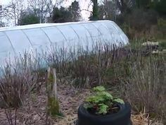 Permaculture Food Forest Growing in Ireland