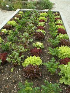 39 Besten Hochbeet Bilder Auf Pinterest Gardening Garden Plants
