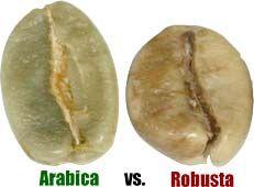 Arabica bean vs. Robusta bean
