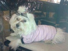 Estrellita y su camiseta de rayas muy coqueta