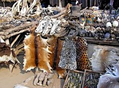 Akodesevu, Togo, the biggest market in the world of magic and voodoo ritual accessories. African Voodoo, Voodoo Rituals, West African Countries, Voodoo Hoodoo, Legends And Myths, Witch Doctor, Voodoo Dolls, Occult, Deities