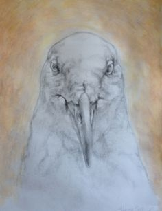 Glaucous Gull A large graphite and acrylic painting from one of my favorite models at the Peabody Natural History Museum,