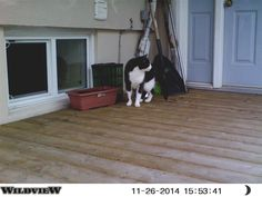 Found Cat - Domestic Short Hair - Dundalk, Ontario, Canada on November 28, 2014 (23:30 PM)