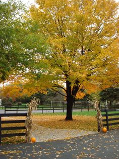 Fall Colors in Carlisle PA