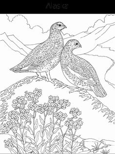 hard coloring pages for adults bird and flower coloring page
