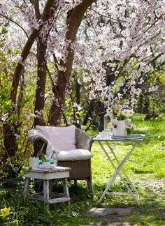 kersenbloem, stoel onder kersenboom met lenteboeket op tafeltje