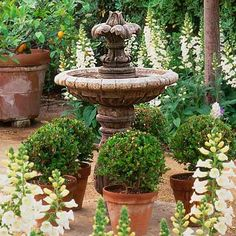 cottage garden with path of decomposed granite, foxglove, boxwood globes and a tiered fountain