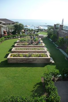 Kitchen Garden at the Montage in Laguna Beach  Run beds perpendicular to the fence at work or home.