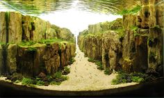 These aren't your childhood fishbowls. Behold the underwater are of competitive aquascaping.  http://www.thisiscolossal.com/2014/01/the-incredible-underwater-art-of-aquascaping/