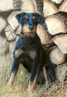 German Hunting Terrier by Maehler, looks a lot like my girl. <3
