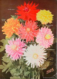 The world's best dahlias /. Dahlialand, N.J. :The Nursery..
