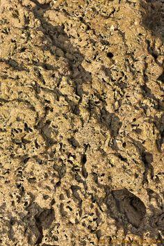 Beach rock texture - http://thetextureclub.com/rock/beach-rock-texture-4