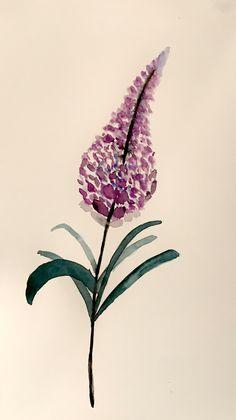Watercolor, Plants, Pen And Wash, Watercolor Painting, Watercolour, Plant, Watercolors, Watercolour Paintings, Planets