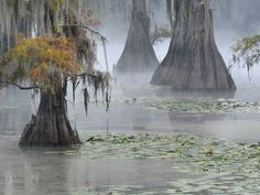 Caddo Lake Louisiana Swamp, Texas Vacations, Cajun Food, San Jacinto, Cypress Trees, Amazon Rainforest, Nature Pictures, Travel Usa, Art Ideas