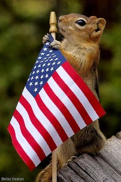 Proud To Be An American | Cutest Paw