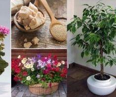 Salvia, Herb Garden, Indoor Plants, Herbs, Rustic, Cottages, Gardening, Home, Plant Pots