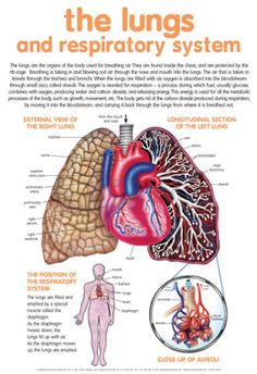#lungs and #respiratory system