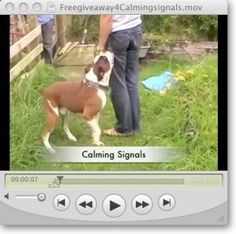 Become The Pack Leader - Waggy Furry Tails Online Dog Training, Dog Training School, Best Dog Training, Furry Tails, Dog Whisperer, Free Dogs, Dog Costumes, Dog Behavior, Dog Owners