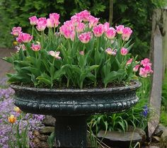 Spring tulips....beautiful! I never would have thought to plant them this way...Love this idea!