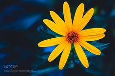 Flower by Apst via http://ift.tt/2gZEHQI