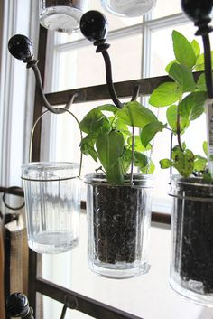 Want to keep a lot of herbs easily at the ready? Here's another window solution, from Itsy Bits and Pieces: Pot your herbs in clear drinking glasses, and hang from hooks across the window. Give your green thumb a shot with these DIY indoor herb planters. Container Gardening, Gardening Tips, Indoor Gardening, Organic Gardening, Organic Horticulture, Flower Gardening, Culture D'herbes, Plantas Indoor, Decoration Plante