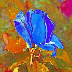 """Blue rose"" by Magdalen DgArtStudio Available on Fineartamerica Love Rose, Love Flowers, Spring Is Coming, Create Image, Digital Art, Greeting Cards, Wall Art, Pictures, Blue"