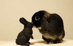 Free HD Wallpapers for your computer: Rabbit kiss black bunny Rabbit Wallpaper, Animal Wallpaper, Hd Wallpaper, Wallpapers, Baby Animals, Cute Animals, Animal Fun, Animal Care, Rabbit Silhouette
