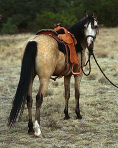 I LOVE this picture, but you should of straightened up the saddle....