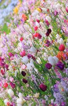 Tulips and other spring flowers My Flower, Flower Power, Beautiful Flowers, Spring Flowers, Wild Flowers, Blooming Flowers, Dream Garden, Garden Inspiration, Beautiful Gardens