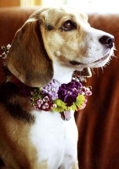 Vou ao casamento!!