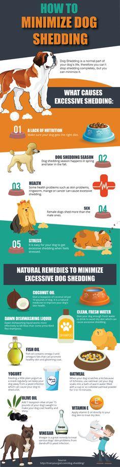 How to minimize dog shedding! http://www.vetfield.com/