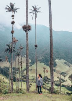 Hiking Cocora Valley in Salento, Colombia. Gorgeous Wax Palm National Park.