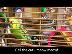 Disco the parakeet