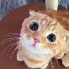 Cute Baby Cats, Cute Little Animals, Cute Cats And Kittens, Cute Funny Animals, Kittens Cutest, Kitty Cats, Funny Cats, Baby Animals Pictures, Funny Animal Pictures