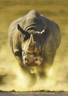 rhino | Only a quarter-way through the year, and already 181 rhino have been ...