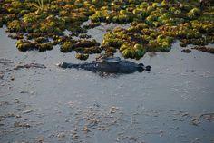 Национальный Парк Какаду - Дикая Австралия. Крокодилы, красный пейзаж, смешанный с болотистыми разливами биллабонга, собаки Динго, водопады. Австралийские птицы в своей естественной среде. Фото кстати снова от наших клиентов Дмитрия и Александра - спасибо им за это! Полностью статью можно прочитать в блоге Beyond Jet (ссылка в профиле @beyondjet)  А для организации тура в Австралию с нами можно связаться в WhatsApp, Viber +61479036971 или через наш сайт, ссылка опять же в профиле…