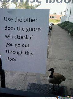 Goose?