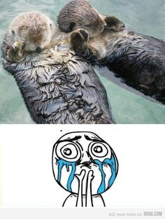 otters hold hands when they sleep so they don't float away.