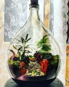 Plants In Bottles, Glass Bottles, Bottle Garden, Bottle Plant, Garden Terrarium, Terrarium Ideas, Vivarium, Water Plants, Indoor Plants