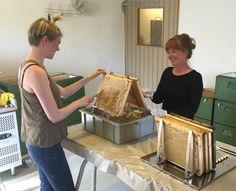 Familiens damer skræller tavler før de skal slynges tomme for honning.